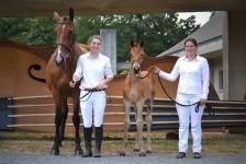 Foals 2015 - Finale régionale